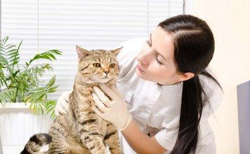 Astım ve kediler…