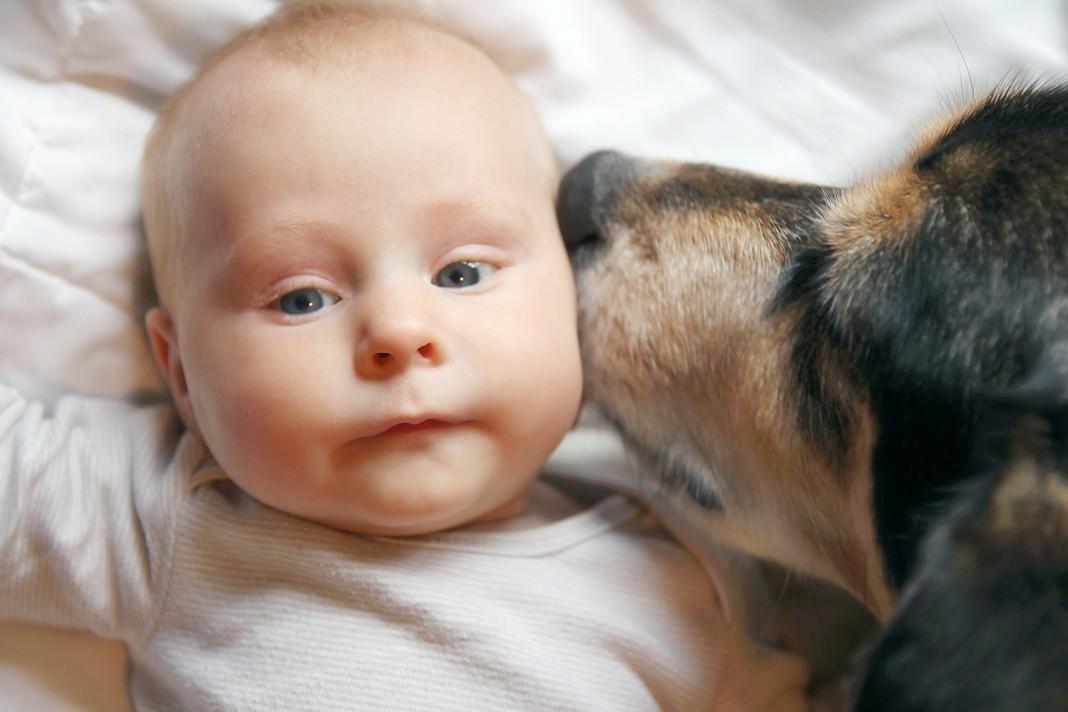 Köpeğiniz yeni bir bebeğe sizin kadar hazır mı?