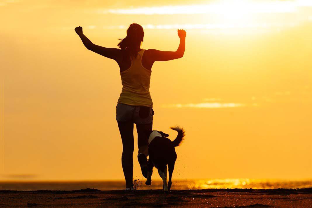Köpeğinizi eğitmek için en ideal zamanlar!