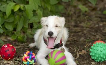 Köpekler için doğru oyuncak seçimi