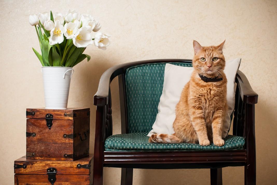 Kedim evde yalnız kalabilir mi?