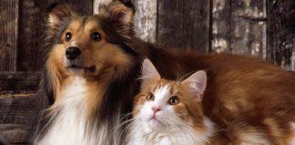 Kediniz ve köpeğiniz tanışırken...