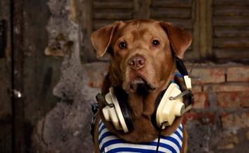 Köpekler müzik dinlemekten hoşlanır mı?