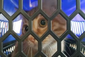 İnsana aşık olan kedi Simit
