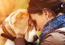Psikolojik sorunlara köpek sevgisiyle tedavi!