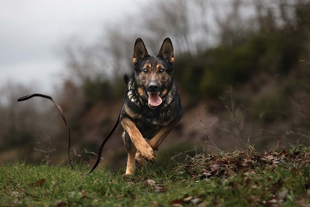İş dünyası köpekleri keşfetti!