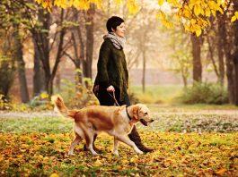 Köpeğinize tasmayı çekiştirmeden yürümeyi öğretin