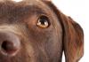 Kedi ve köpeklerde göz sağlığı ihmale gelmez!