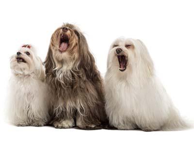 Tüm gün evde yalnız kalan köpekler