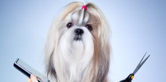 Petlerde grooming sırları