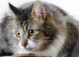 Kedime ne kadar mama vermeliyim?