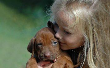 Yavru köpeklerde diş sağlığı