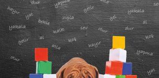 Köpekler ve kelimelere yaklaşımları