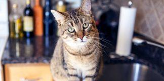 Kediler için evdeki tehlikeler