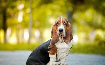 Köpeklerde anal kese problemleri