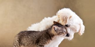 Hayvanlarda pire alerjisi dermatiti