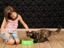 Kedi mamalarında tat değil fayda önemli!