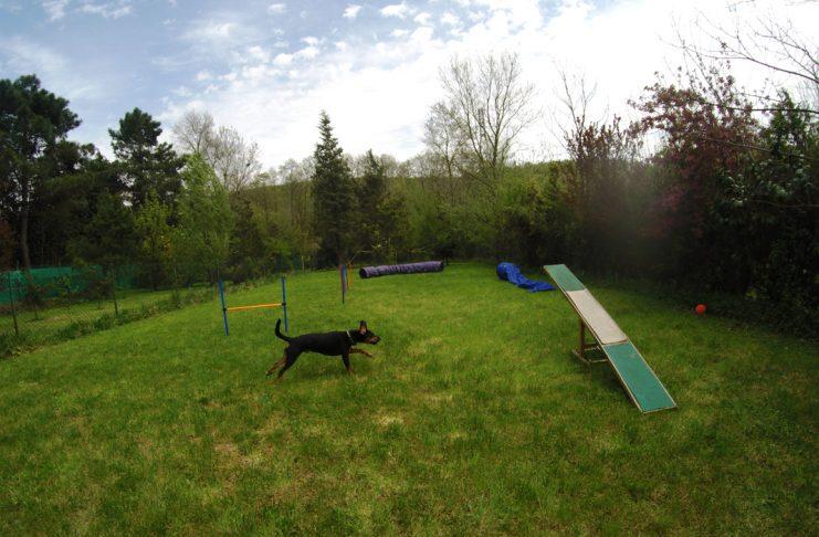 Köpekler için tasarlanmış bir kulüp; Petigen Köpek Oyun Parkı