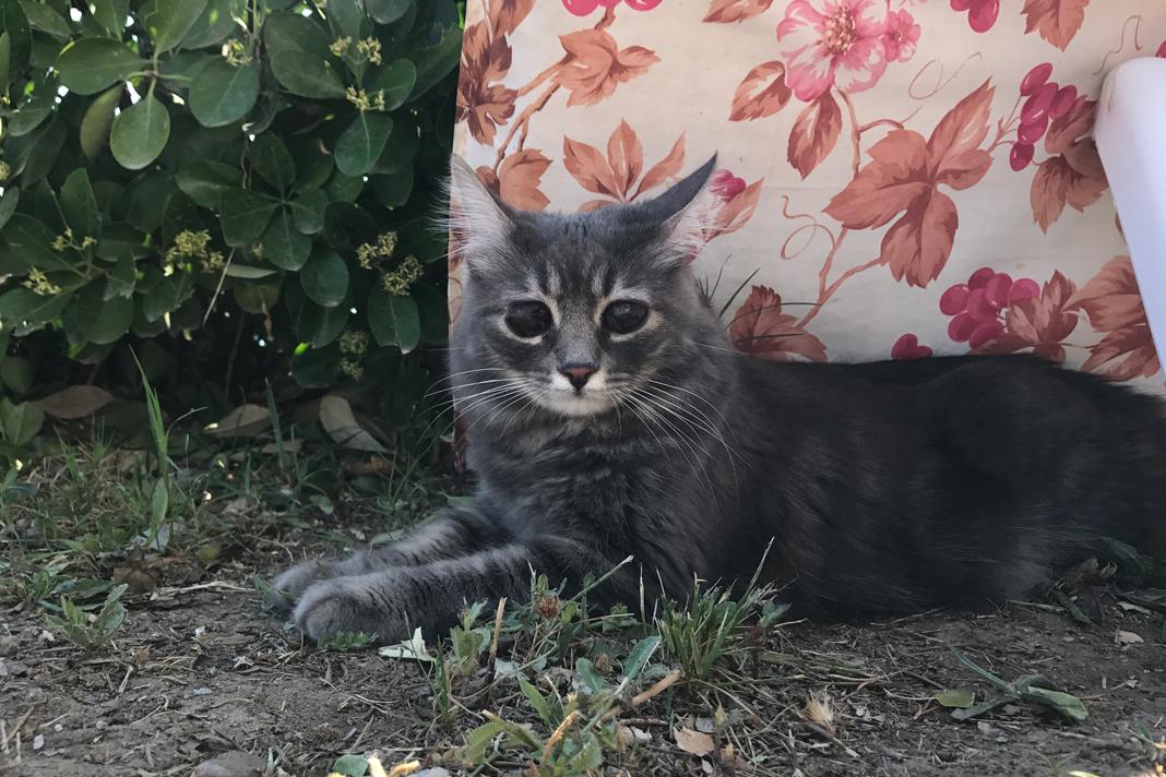 Kör kedi Bıdık yazlıkta!