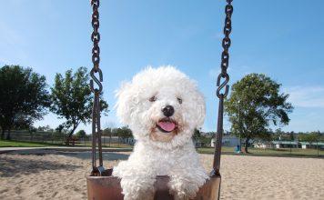 Sıcak havalarda kalp hastası hayvanlara dikkat!