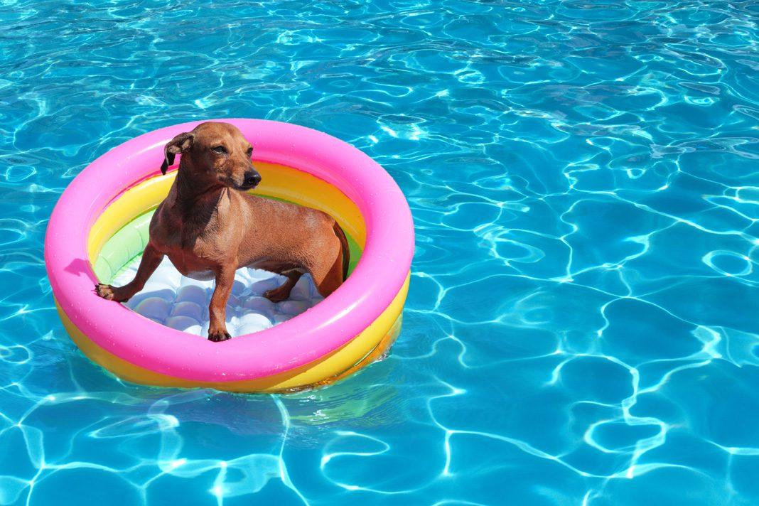 Köpeğiniz için yaz önlemleri almayı unutmayın