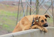 ÖZÜ Kampüs Köpekleri