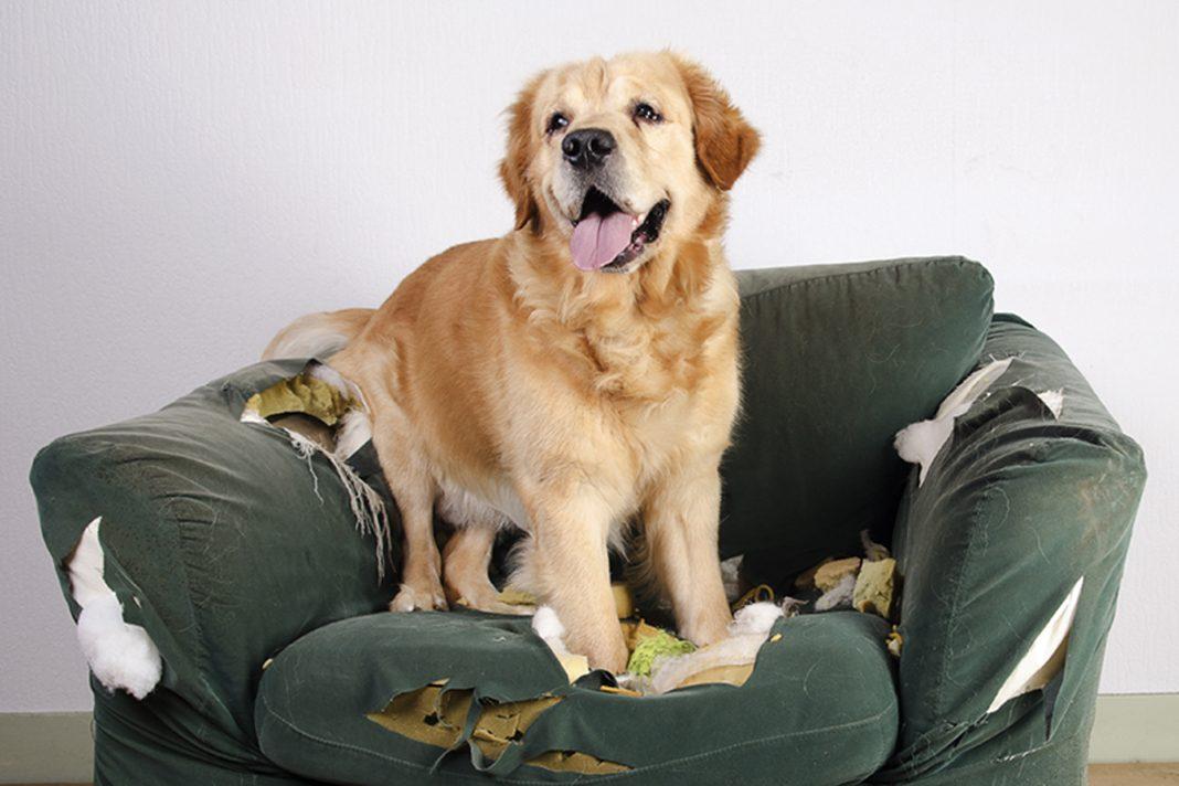 Köpeğim eşyaları kemiriyor, ne yapabilirim?