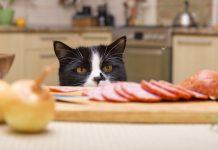 Kediler için sağlıklı atıştırmalıklar...
