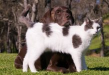 Kedi ve köpeklerde kanserin belirtileri