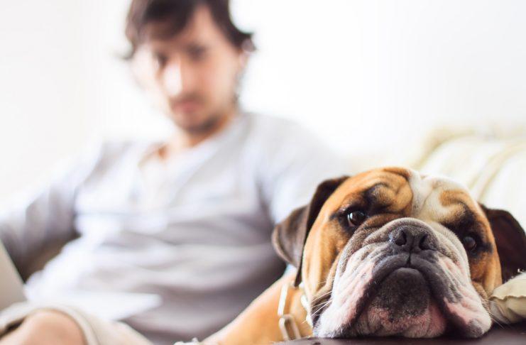 Köpeklerde mama değişikliği