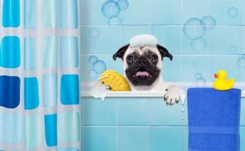 Köpeğimi yıkarken nelere dikkat etmeliyim?