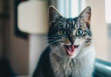 Kedilerin sevmediği davranışlar!