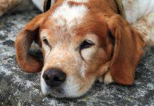 Köpeklerde epilepsi