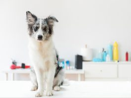 Köpeklerde kanlı ishal