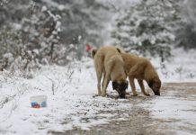 Nilüfer'deki sokak canları için kış hazırlıkları başladı!