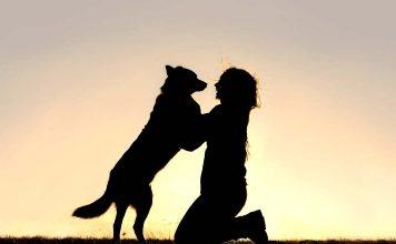 Üzerimize atlayan köpekler