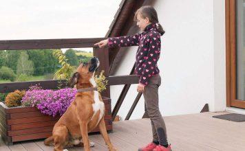 Bırakın köpeğinizi çocuğunuz eğitsin