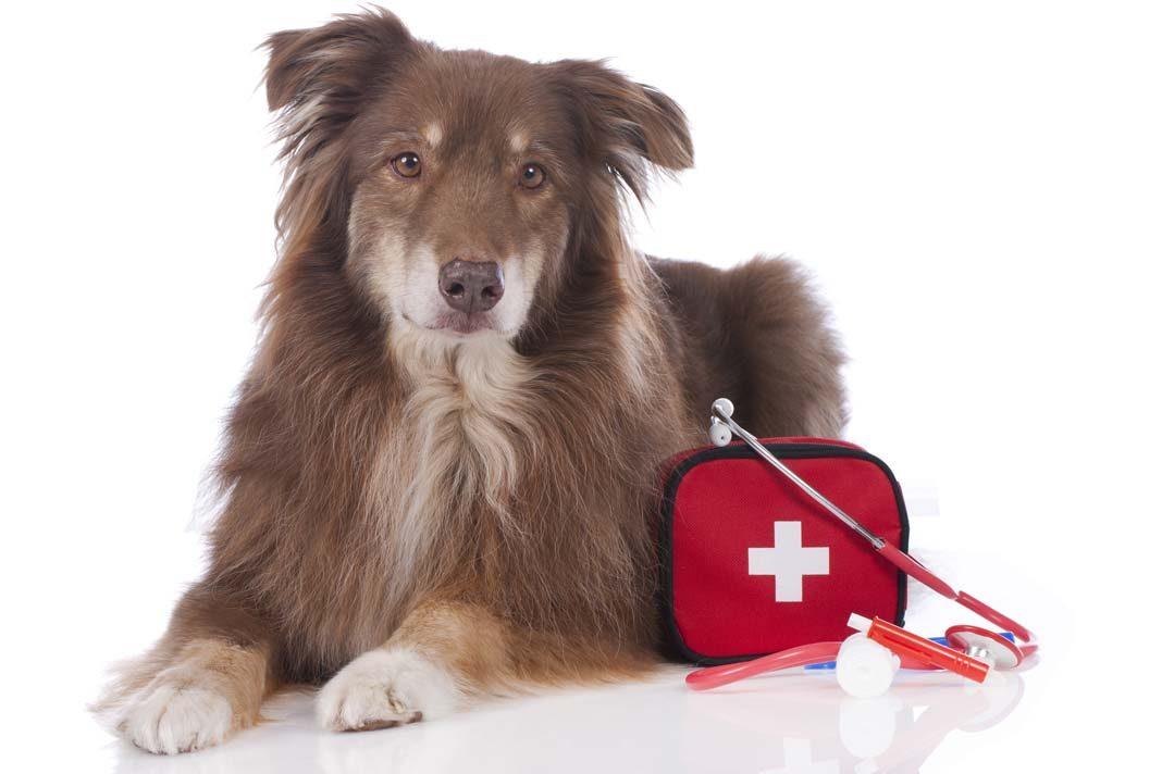 İlk yardım çantanız hazır mı?