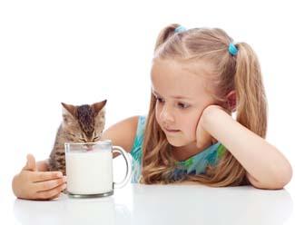 Süt içen kedi