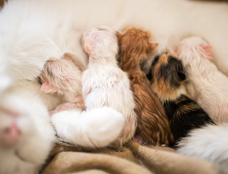 Hamile kedi bakımı...