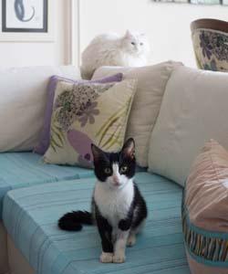 Birbiriyle pek anlaşamayan iki kediyi aynı karede uslu uslu otururken görmek...