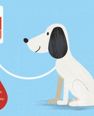 Köpekler ve kan bağışı!