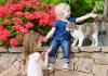Kediler sevgilerini nasıl gösterir?