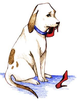 Köpek eğitim ipuçları