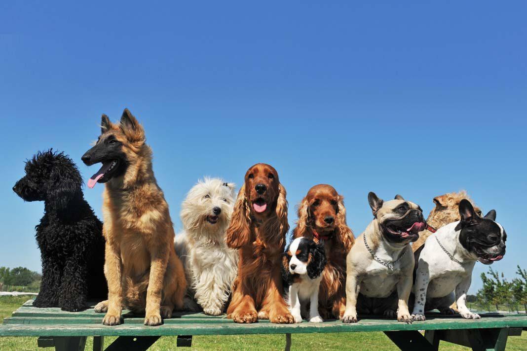 Köpeklerde davranış bozuklukları