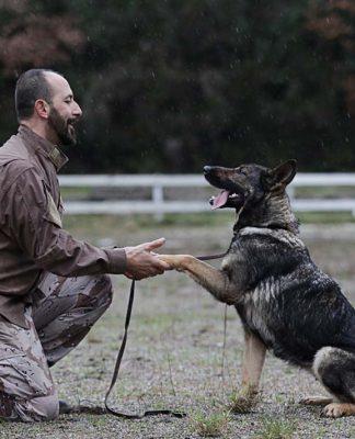 Köpeğinizi kendiniz eğitebilirsiniz!