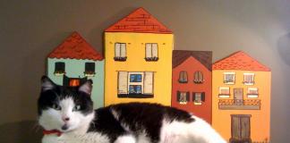 """""""PODO tasarımlarında önceliğimiz sokak hayvanlarının konforu"""""""