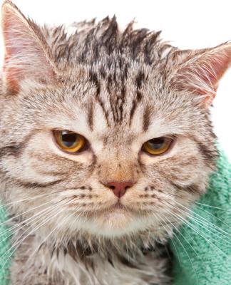 Kedimi yıkamalı mıyım?