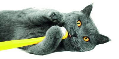 Kedilerin diş sağlığını korumanın 5 yolu!