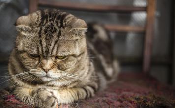 Kedi ve köpeklerde hipertansiyon hakkında bilinmeyenler...